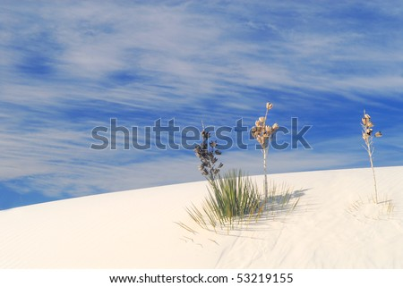 Cactus growing in the White Sand Dunes National Park in New Mexico