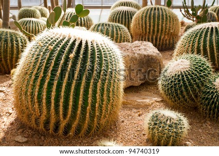 Cactus in a dome