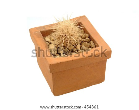 cactus in a pot - stock photo