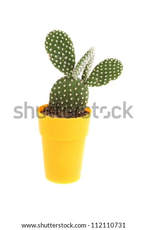 Cactus  in a pot on a white background - stock photo