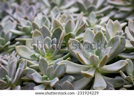 Cactus in botanic garden - stock photo
