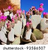 cactus in desert - stock photo