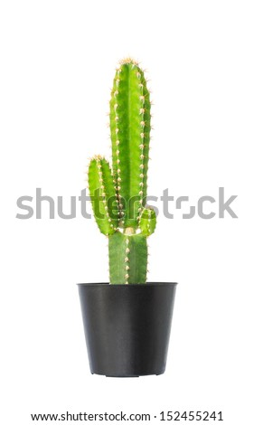 Cactus in flowerpot isolated on white background - stock photo
