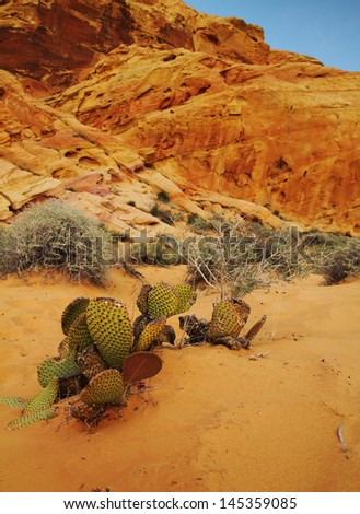 Cactus in foreground of orange rocks at Valley of fire in Nevada, United States - stock photo