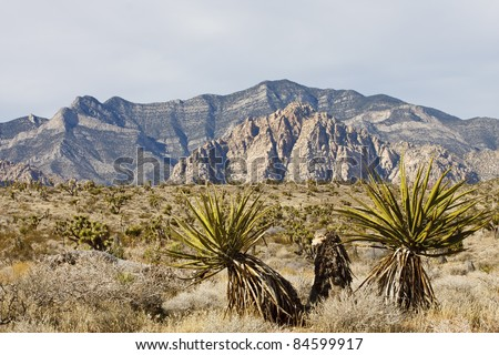 Cactus in foreground with desert and hills in background - stock photo