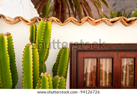 Cactus in front of a traditional house in Betancuria, Fuerteventura, Canary islands, Spain