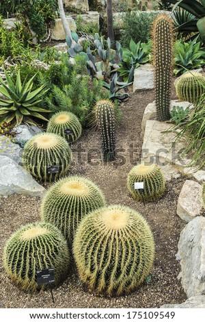 Cactus in Kew botanical garden. Richmond, London, UK - stock photo