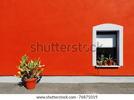 Cactus in pot frontred wall and window - stock photo