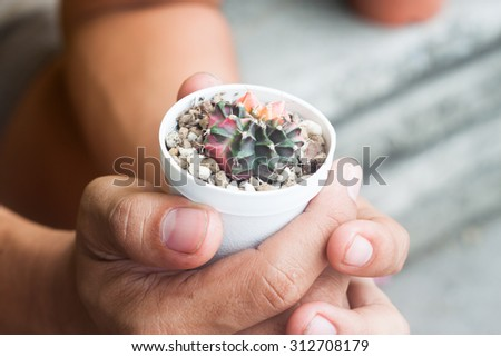 Cactus in pot plant on human hands