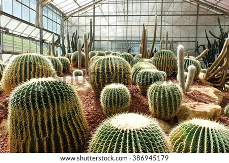 cactus in Queen Sirikit Botanic Garden,chiangmai Thailand - stock photo