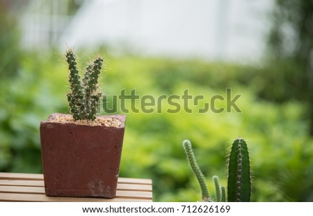cactus in Stone pot green nature background