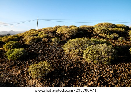 Cactus in the Desert at Sunset Tenerife South Canary Islands Spain - stock photo