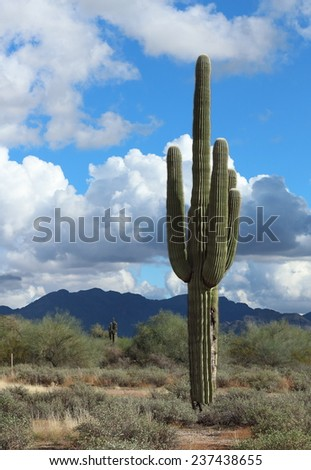Cactus in the desert with blue sky and mountain range in background - stock photo