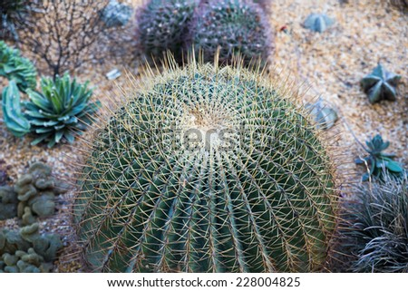 Cactus is a plant that uses very little water. - stock photo