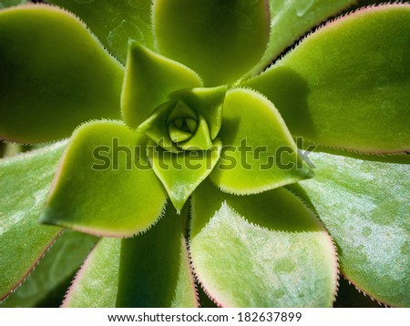 Cactus Macro with Vivid Texture and Color - stock photo