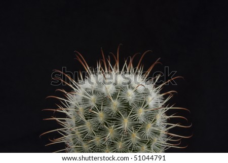 cactus on a black background