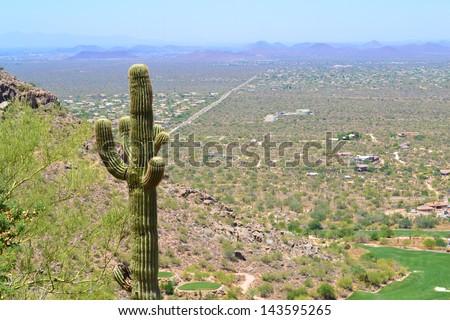 Cactus on the Side of Pinnacle Peak Mountain overlooking Scottsdale, Arizona - stock photo