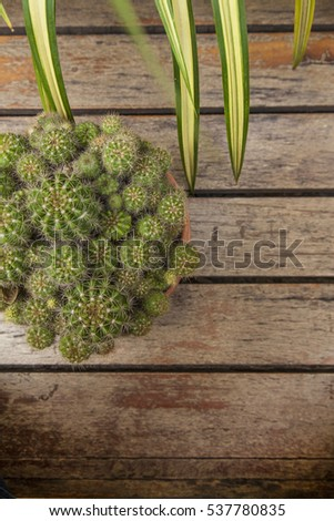 Cactus on the wood background with top view , flat lay