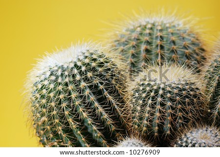 cactus plant - stock photo
