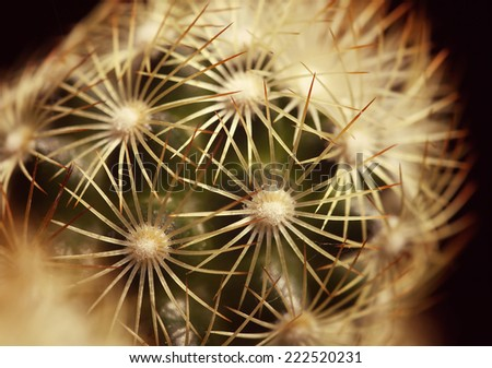 Cactus plant details - as a macro background - stock photo
