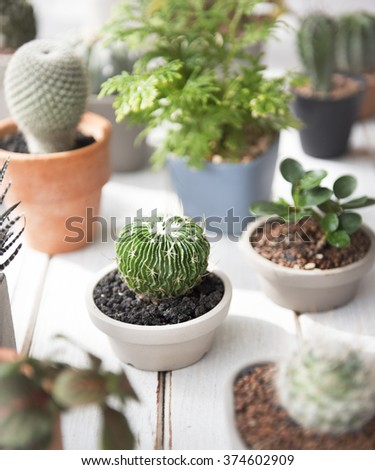 Cactus Plant Tree Pot Nature Environmental Conservation Concept - stock photo