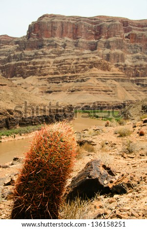 Cactus plant with Grand Canyon in the background, Grand Canyon National Park, Arizona, USA - stock photo