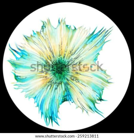 Cactus pollen under a microscope, (Stellato-Pilosus W.M.). 400x, blur - stock photo