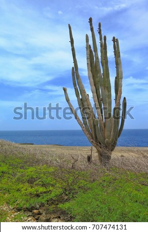 Cactus, rocky coastline and the sea and cloudy blue sky in the background. Tropical dry forest national park scenery, adventure hiking, biking and off-road trip.