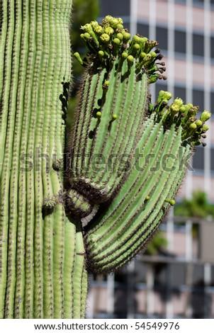 Cactus Southwestern City, Downtown Tucson, Arizona - stock photo