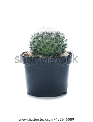 Cactus succulent plant in flowerpot on white background. - stock photo