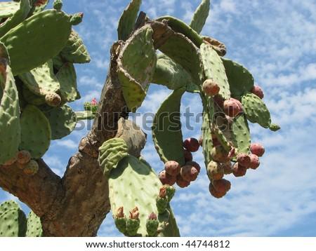 Cactus towards sky - stock photo