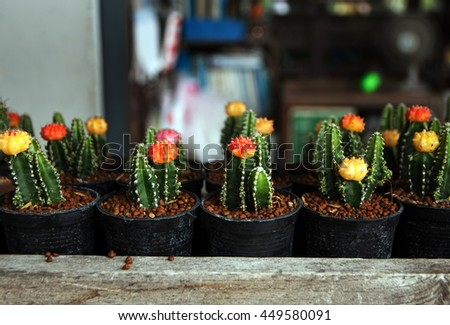 Cactus with flower cactus in a pot and selective focus. - stock photo