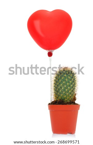 Cactus with read heart balloon isolated on white background  - stock photo