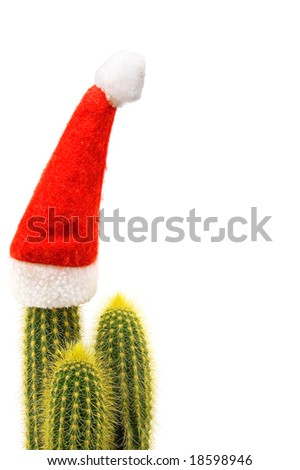 cactus with santa cap isolated