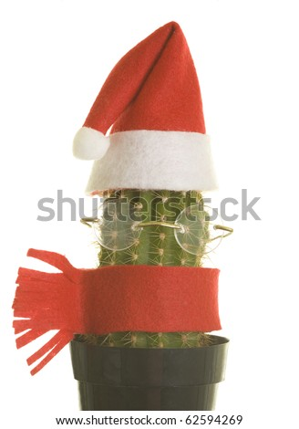 Cactus with Santa Claus hat, glasses and scarf; isolated on white background - stock photo