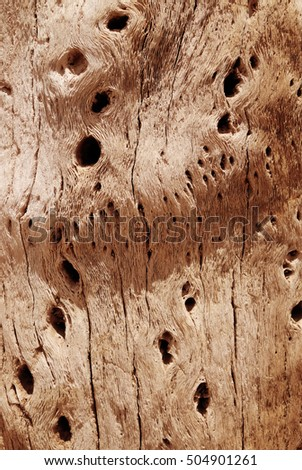 Cactus wood bark background texture