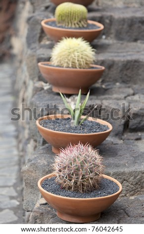 cactuses in a tropical garden. focus on first cactus. - stock photo