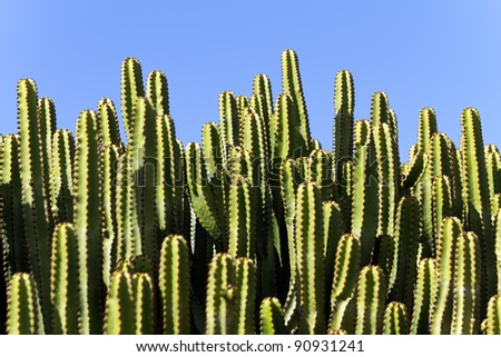 cactuses in a tropical garden in Lanzarote.  Lanzarote a Spanish island, is one of the Canary Islands, in the Atlantic Ocean, appr. 127 km off the coast of Africa - stock photo