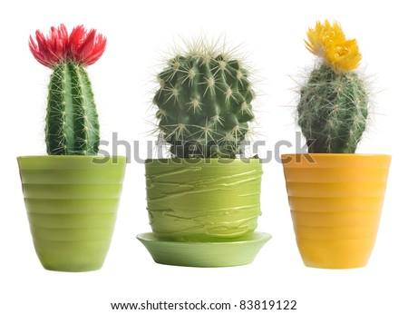 cactuses on white background - stock photo