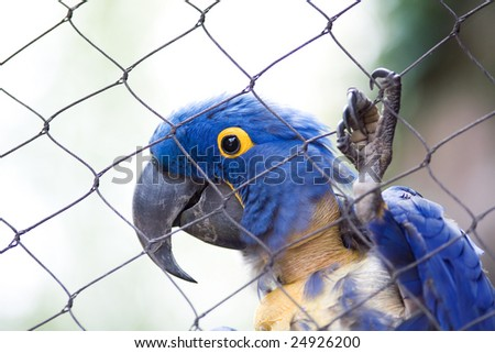 Caged Bird - stock photo