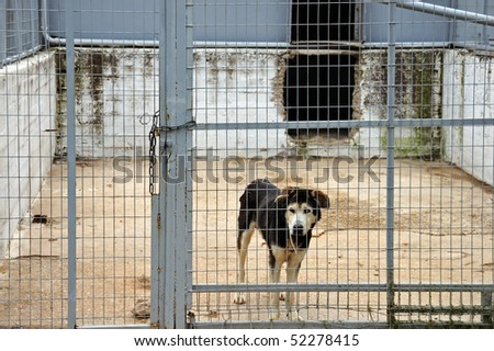 Caged dog guarding the entrance of an abandoned warehouse.