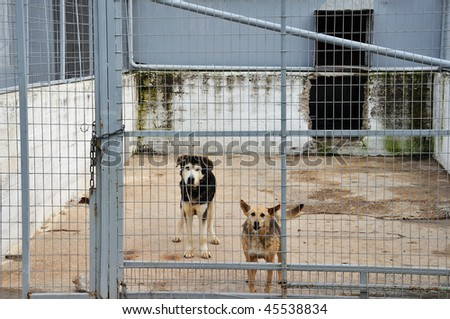 Caged dogs guarding the entrance of an abandoned warehouse. - stock photo