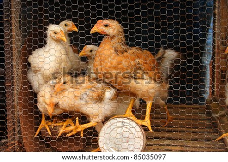 Caged hens in a village in the northern highlands of Vietnam South East Asia - stock photo
