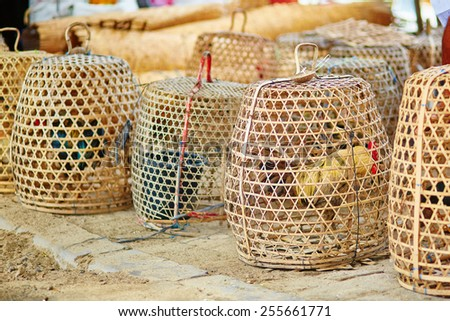 Caged roosters on a Balinese street market - stock photo