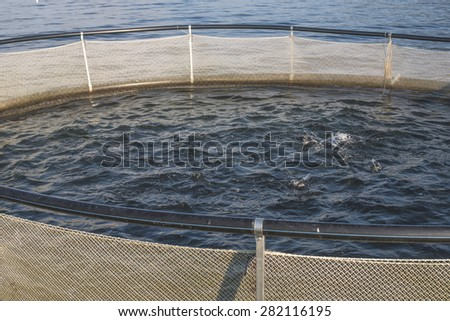 Cages for fish farming in mountain lake - stock photo
