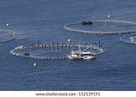 Cages for tuna farming in Adriatic sea in Croatia - stock photo