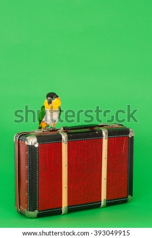 Caique (black-headed noble parrot) sitting on a red candle while eating a Christmas cookie with almonds. Vertical image with green background. - stock photo