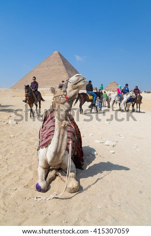 CAIRO, EGYPT - FEBRUARY 3, 2016: Camel for rent in front of the Great Pyramid of Giza.