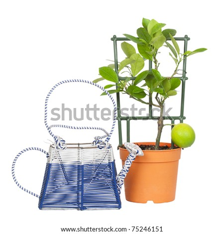 Calamondin and watering isolated on a white background - stock photo
