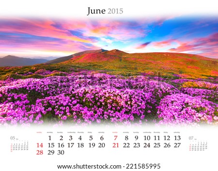 Calendar 2015. June. Blossom field of rhododendron flowers in the mountains at sunrise. - stock photo